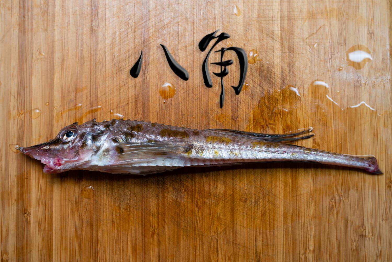 八角という魚を、焼き魚と煮魚にして味をレポートしました